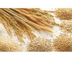 Angajez muncitori la fabrica de cereale